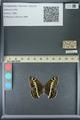 http://mczbase.mcz.harvard.edu/specimen_images/ent-lepidoptera/images/2013_07_02/IMG_143674.JPG