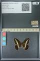 http://mczbase.mcz.harvard.edu/specimen_images/ent-lepidoptera/images/2013_07_02/IMG_143677.JPG