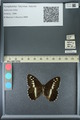 http://mczbase.mcz.harvard.edu/specimen_images/ent-lepidoptera/images/2013_07_02/IMG_143678.JPG