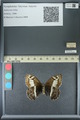http://mczbase.mcz.harvard.edu/specimen_images/ent-lepidoptera/images/2013_07_02/IMG_143679.JPG