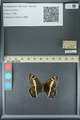 http://mczbase.mcz.harvard.edu/specimen_images/ent-lepidoptera/images/2013_07_02/IMG_143680.JPG