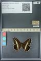 http://mczbase.mcz.harvard.edu/specimen_images/ent-lepidoptera/images/2013_07_02/IMG_143682.JPG