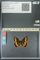 http://mczbase.mcz.harvard.edu/specimen_images/ent-lepidoptera/images/2013_07_03/IMG_143685.JPG