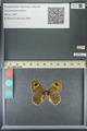 http://mczbase.mcz.harvard.edu/specimen_images/ent-lepidoptera/images/2013_07_03/IMG_143687.JPG