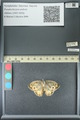 http://mczbase.mcz.harvard.edu/specimen_images/ent-lepidoptera/images/2013_07_03/IMG_143688.JPG