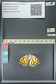http://mczbase.mcz.harvard.edu/specimen_images/ent-lepidoptera/images/2013_07_03/IMG_143689.JPG