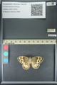 http://mczbase.mcz.harvard.edu/specimen_images/ent-lepidoptera/images/2013_07_03/IMG_143690.JPG