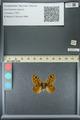 http://mczbase.mcz.harvard.edu/specimen_images/ent-lepidoptera/images/2013_07_03/IMG_143691.JPG