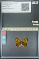 http://mczbase.mcz.harvard.edu/specimen_images/ent-lepidoptera/images/2013_07_03/IMG_143692.JPG