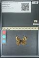 http://mczbase.mcz.harvard.edu/specimen_images/ent-lepidoptera/images/2013_07_03/IMG_143694.JPG