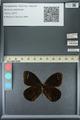http://mczbase.mcz.harvard.edu/specimen_images/ent-lepidoptera/images/2013_07_03/IMG_143698.JPG
