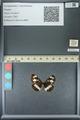 http://mczbase.mcz.harvard.edu/specimen_images/ent-lepidoptera/images/2013_07_03/IMG_143701.JPG
