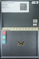 http://mczbase.mcz.harvard.edu/specimen_images/ent-lepidoptera/images/2013_07_05/IMG_143838.JPG