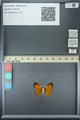 http://mczbase.mcz.harvard.edu/specimen_images/ent-lepidoptera/images/2013_07_05/IMG_143929.JPG