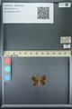 http://mczbase.mcz.harvard.edu/specimen_images/ent-lepidoptera/images/2013_07_08/IMG_144181.JPG