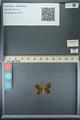 http://mczbase.mcz.harvard.edu/specimen_images/ent-lepidoptera/images/2013_07_08/IMG_144182.JPG