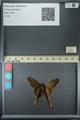 http://mczbase.mcz.harvard.edu/specimen_images/ent-lepidoptera/images/2013_07_12/IMG_144975.JPG