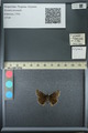 http://mczbase.mcz.harvard.edu/specimen_images/ent-lepidoptera/images/2013_07_12/IMG_144985.JPG