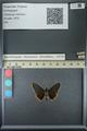 http://mczbase.mcz.harvard.edu/specimen_images/ent-lepidoptera/images/2013_07_15/IMG_145077.JPG