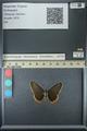 http://mczbase.mcz.harvard.edu/specimen_images/ent-lepidoptera/images/2013_07_15/IMG_145078.JPG