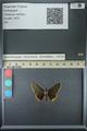 http://mczbase.mcz.harvard.edu/specimen_images/ent-lepidoptera/images/2013_07_15/IMG_145079.JPG