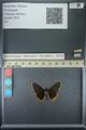 http://mczbase.mcz.harvard.edu/specimen_images/ent-lepidoptera/images/2013_07_15/IMG_145080.JPG