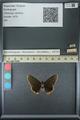 http://mczbase.mcz.harvard.edu/specimen_images/ent-lepidoptera/images/2013_07_15/IMG_145081.JPG