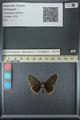 http://mczbase.mcz.harvard.edu/specimen_images/ent-lepidoptera/images/2013_07_15/IMG_145082.JPG