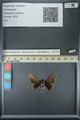 http://mczbase.mcz.harvard.edu/specimen_images/ent-lepidoptera/images/2013_07_15/IMG_145083.JPG