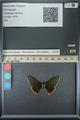 http://mczbase.mcz.harvard.edu/specimen_images/ent-lepidoptera/images/2013_07_15/IMG_145084.JPG