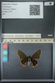 http://mczbase.mcz.harvard.edu/specimen_images/ent-lepidoptera/images/2013_07_15/IMG_145085.JPG