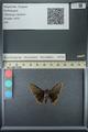 http://mczbase.mcz.harvard.edu/specimen_images/ent-lepidoptera/images/2013_07_15/IMG_145086.JPG