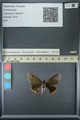 http://mczbase.mcz.harvard.edu/specimen_images/ent-lepidoptera/images/2013_07_15/IMG_145089.JPG