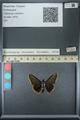 http://mczbase.mcz.harvard.edu/specimen_images/ent-lepidoptera/images/2013_07_15/IMG_145090.JPG