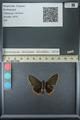 http://mczbase.mcz.harvard.edu/specimen_images/ent-lepidoptera/images/2013_07_15/IMG_145091.JPG