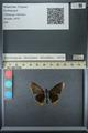http://mczbase.mcz.harvard.edu/specimen_images/ent-lepidoptera/images/2013_07_15/IMG_145092.JPG