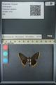 http://mczbase.mcz.harvard.edu/specimen_images/ent-lepidoptera/images/2013_07_15/IMG_145093.JPG
