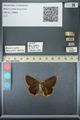 http://mczbase.mcz.harvard.edu/specimen_images/ent-lepidoptera/images/2013_07_17/IMG_145589.JPG