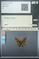 http://mczbase.mcz.harvard.edu/specimen_images/ent-lepidoptera/images/2013_07_18/IMG_145679.JPG