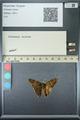http://mczbase.mcz.harvard.edu/specimen_images/ent-lepidoptera/images/2013_07_18/IMG_145680.JPG