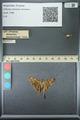 http://mczbase.mcz.harvard.edu/specimen_images/ent-lepidoptera/images/2013_07_18/IMG_145716.JPG