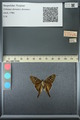 http://mczbase.mcz.harvard.edu/specimen_images/ent-lepidoptera/images/2013_07_18/IMG_145738.JPG