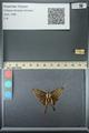 http://mczbase.mcz.harvard.edu/specimen_images/ent-lepidoptera/images/2013_07_18/IMG_145748.JPG