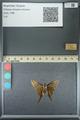 http://mczbase.mcz.harvard.edu/specimen_images/ent-lepidoptera/images/2013_07_18/IMG_145749.JPG