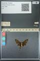 http://mczbase.mcz.harvard.edu/specimen_images/ent-lepidoptera/images/2013_07_18/IMG_145756.JPG