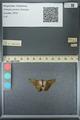 http://mczbase.mcz.harvard.edu/specimen_images/ent-lepidoptera/images/2013_07_18/IMG_145778.JPG