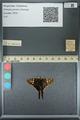 http://mczbase.mcz.harvard.edu/specimen_images/ent-lepidoptera/images/2013_07_18/IMG_145779.JPG