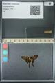 http://mczbase.mcz.harvard.edu/specimen_images/ent-lepidoptera/images/2013_07_18/IMG_145791.JPG