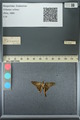 http://mczbase.mcz.harvard.edu/specimen_images/ent-lepidoptera/images/2013_07_18/IMG_145802.JPG