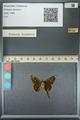 http://mczbase.mcz.harvard.edu/specimen_images/ent-lepidoptera/images/2013_07_19/IMG_145822.JPG